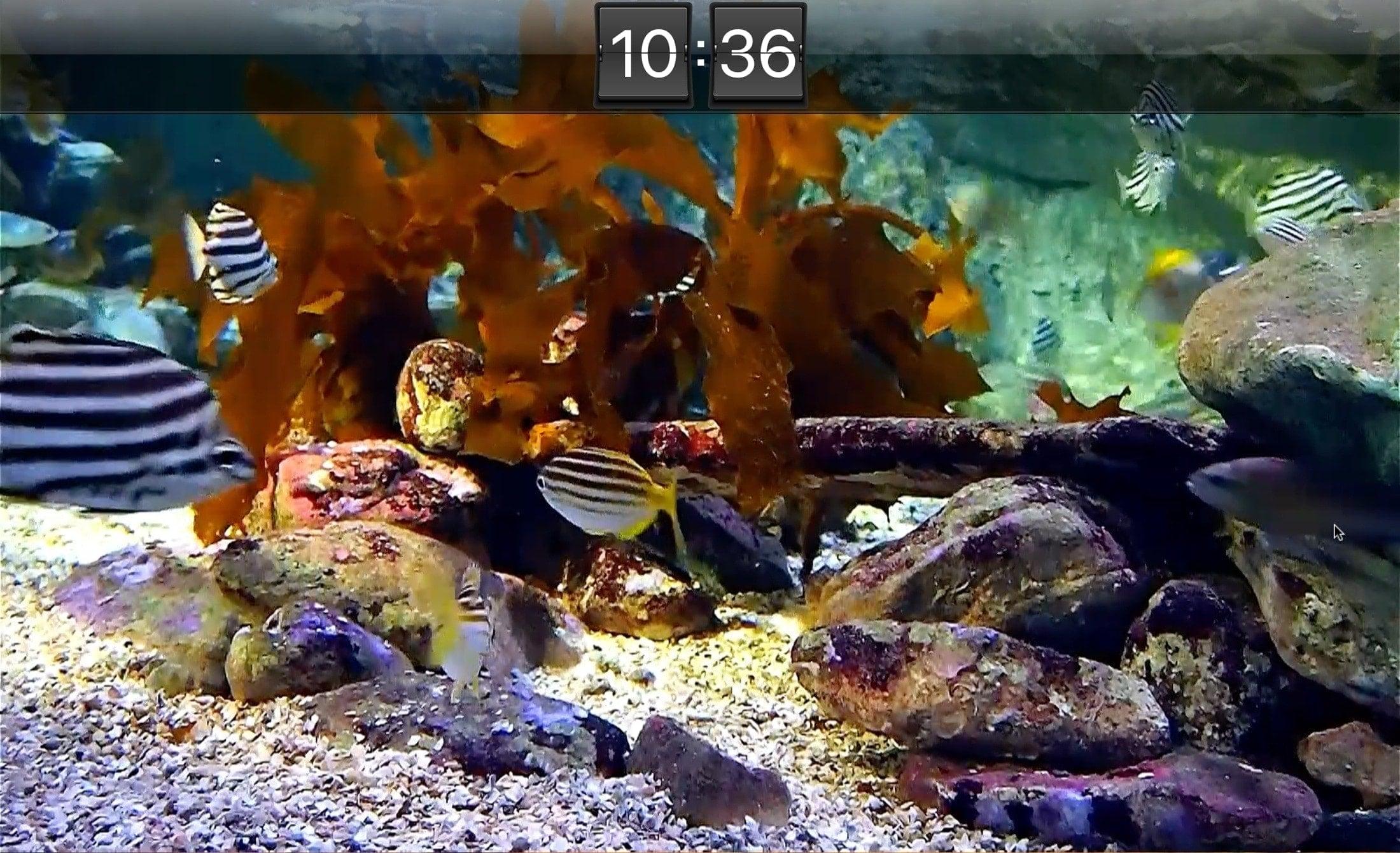 Kết thúc màn hình hồ cá trực tiếp HD