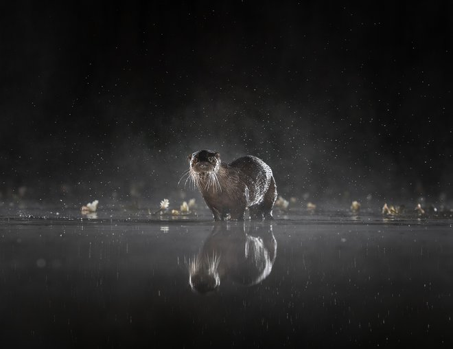 Milli Sony World Photography Awards 2020 8-Dən 57 inanılmaz foto 8