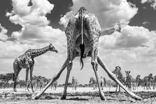 Milli Sony World Photography Awards 2020 6-Dən 57 inanılmaz foto 6