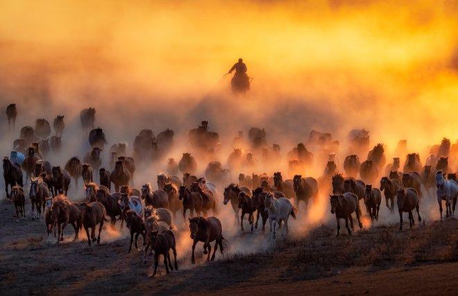 Milli Sony Dünya Fotoqrafiya Mükafatları 2020 23'dən 57 inanılmaz foto