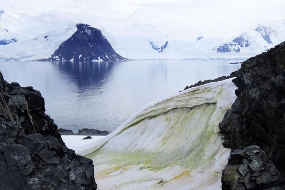 Tại sao tuyết ở Nam Cực chuyển sang màu xanh lá cây? 5