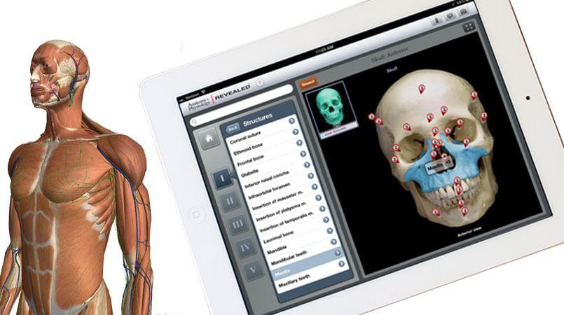 Aplicativo para Android para aprender anatomia humana