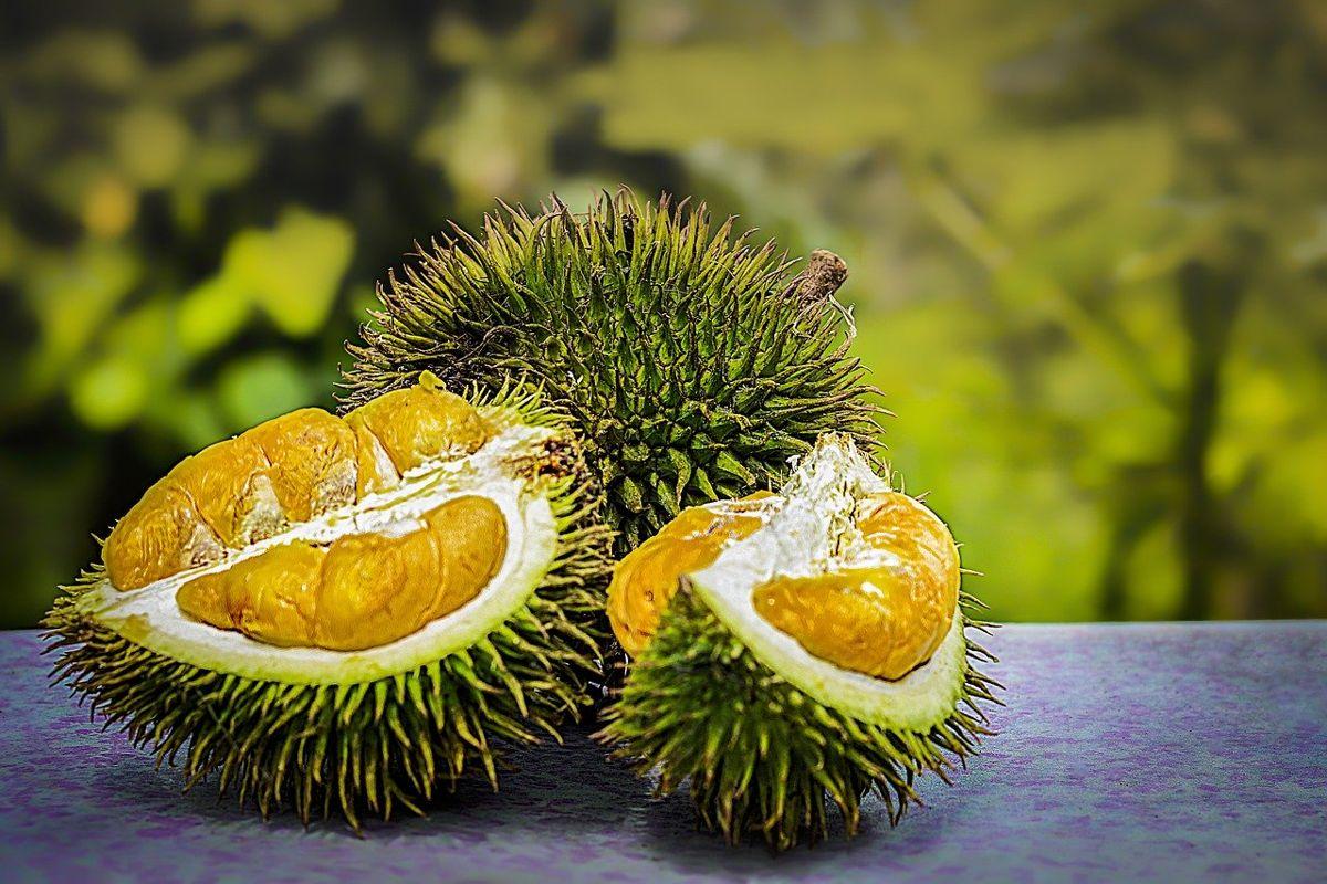 Ovocie Durian by mohlo byť kľúčom k rýchlemu nabíjaniu vašich zariadení 1
