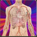 Anatomické aplikácie pre Android: najlepší spôsob, ako sa dozvedieť viac o svojom vnútri 4
