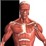 Anatomické aplikácie pre Android: najlepší spôsob, ako sa dozvedieť viac o svojom vnútri 3