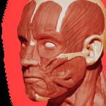 Anatomické aplikácie pre Android: najlepší spôsob, ako sa dozvedieť viac o svojom vnútri 6