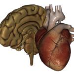 Anatomické aplikácie pre Android: najlepší spôsob, ako sa dozvedieť viac o svojom vnútri 7
