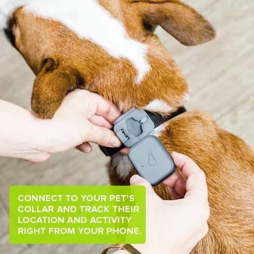 5 GPS trackery pre Android: Monitorujte a sledujte svoje domáce zvieratá 3