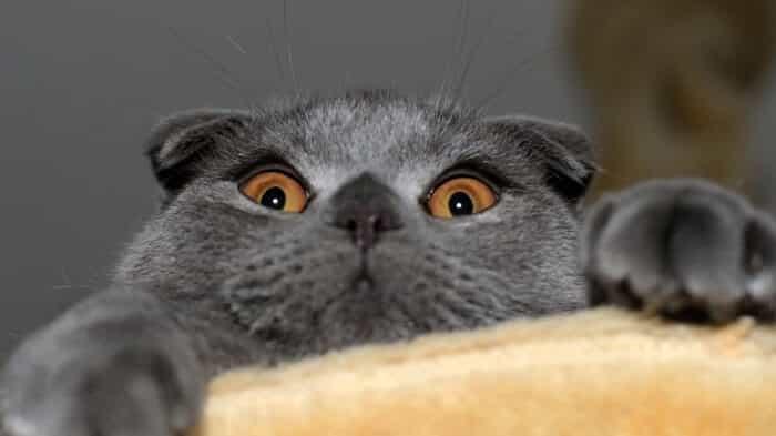 Hravá mačka