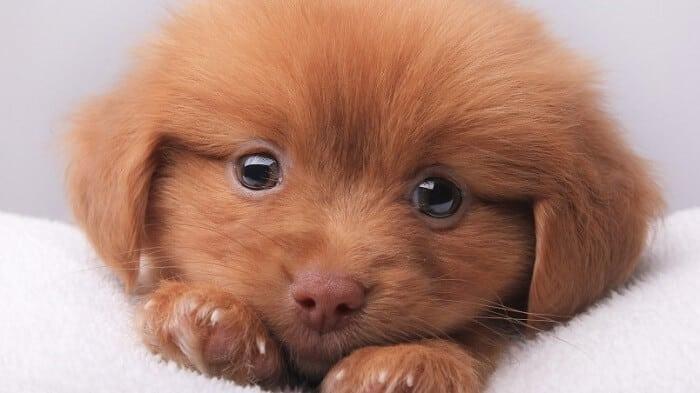 Roztomilé šteniatko