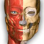 Anatomické aplikácie pre Android: najlepší spôsob, ako sa dozvedieť viac o svojom vnútri 2