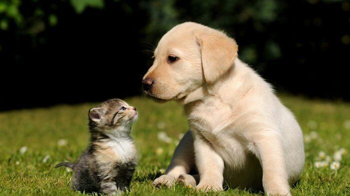 Milí priatelia